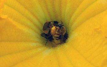 El polen y las abejas: una relación más compleja de lo que aparenta