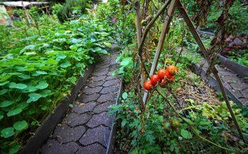 El enfoque agroecológico va a superar el rezago social de comunidades indígenas en México