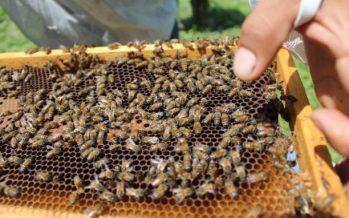 En México, la apicultura, es un sistema sostenible: el caso de San Antonio; Pijijiapan, Chiapas