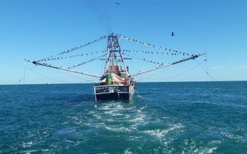 Lidera Conapesca, solicitud de industria camaronera nacional para activar la pesquería, suspendida por la pandemia