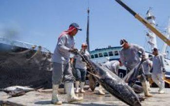 Negocian Inapesca y la NOAA realizar investigación oceánica, particularmente pesquera; el atún, tema prioritario