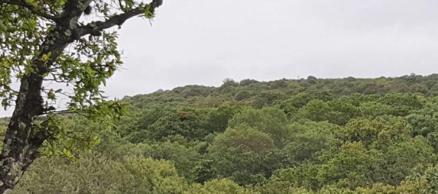 Nuevo ecocidio en Flor del Bosque