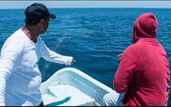 Las pesquerías ante el COVID-19, lo esencial ante lo incierto