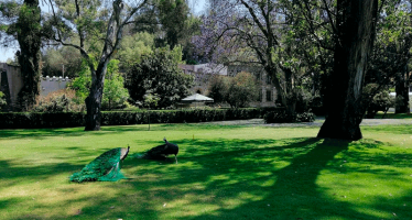 Las ciudades verdes contribuyen a abatir el impacto de la Covid-19, pero… ¡en México no hay!