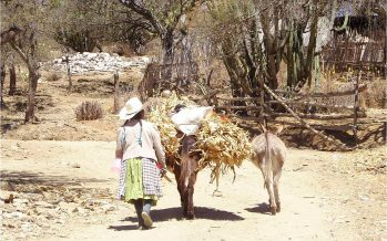 En México, no hay riesgo de extinción de burros (Equus africanus asinus)