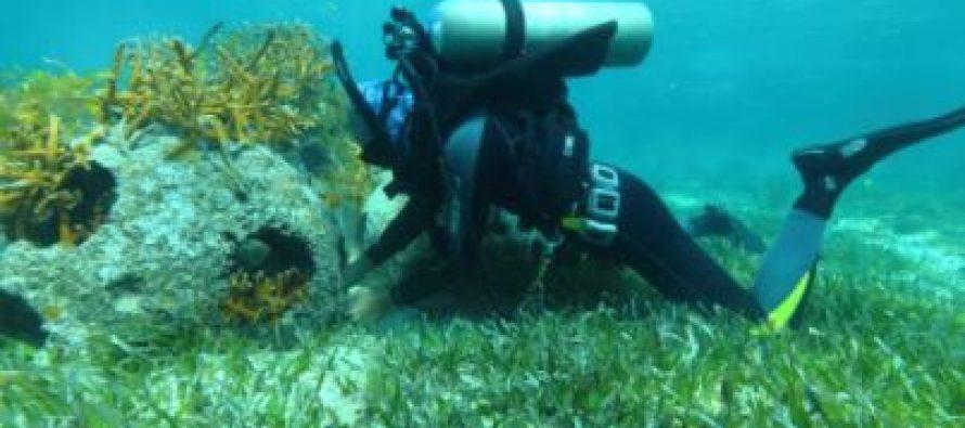 Guardaparques del Caribe Mexicano impulsan estrategias para el control de visitantes