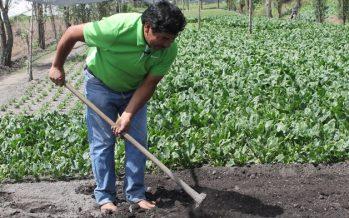 En la Ciudad de México existen y funcionan más de 20 mil chinampas con cultivos tradicionales