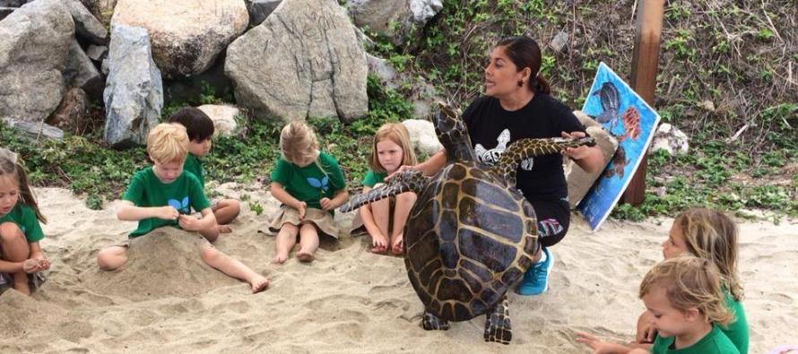 En Nayarit, avanzan tareas de vigilancia y conservación de tortugas marinas con trabajo del Campamento Tortuguero Sayulita