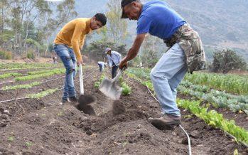 La acción climática en sistemas alimentarios aportaría 20% de la reducción de emisiones requerida para 2050: PNUMA
