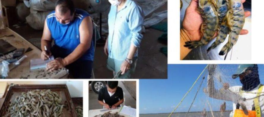 La información científica determina en México la temporada de captura de camarón en el Pacífico