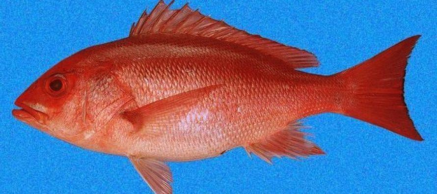 Especies de interés pesquero en el Pacífico Mexicano: Nombres y claves para su registro