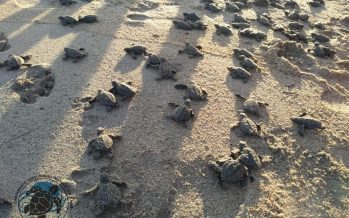 Protección y conservación de tortugas marinas en el Campamento Tortuguero Mangle Sol y Mar en Llano de la Barra, Guerrero