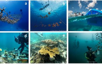 Cinvestav en alianza científica para la restauración de arrecifes coralinos en América Latina