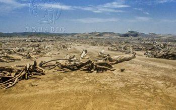 Es evidente que hoy, la humanidad enfrenta una encrucijada, respecto a la protección y conservación de la naturaleza: ONU