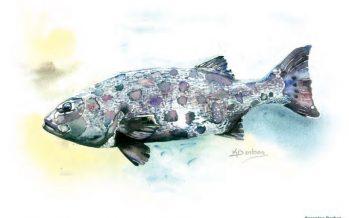 Manuel para el monitoreo biológico del mero gigante (Stereolepis gigas) en aguas mexicanas