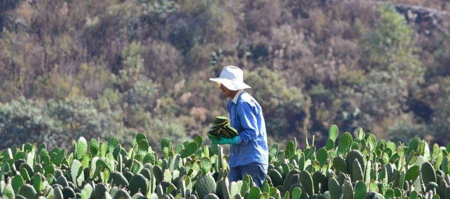 Los agroecosistemas constituyen una adecuada alternativa de producción el campo mexicano; ¡y libre de pesticidas!