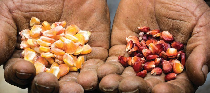 Urgente transitar hacia la agroecología y la alimentación sana para prevenir enfermedades: Conacyt
