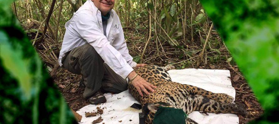 En peligro de desaparecer 40 por ciento de plantas y animales en el mundo: Gerardo Ceballos (UNAM)