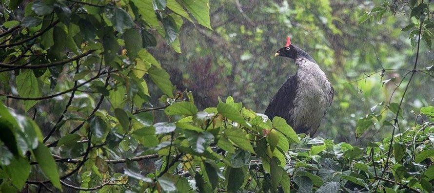 La Reserva de la Biosfera El Triunfo en Chiapas, es un  exitoso modelo del pago por servicios ambientales de fondos concurrentes