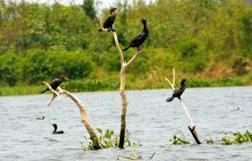 Conanp: Urge contener la contaminación del agua en la cuenca del río La Antigua en Veracruz