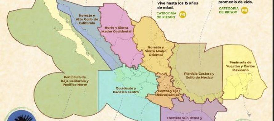 Polémica por infografía de la Conanp con las aves más representativas de sus 9 direcciones regionales