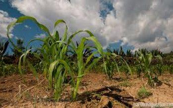 CONABIO y Legislativo de Oaxaca impulsarán la conservación de la agrobiodiversidad en esa entidad y protegerán la milpa