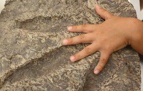 """""""Lo que relatan los fósiles"""", ciclo de conferencias sobre la importancia científica y educativa de los fósiles por INAH TV / YouTube"""
