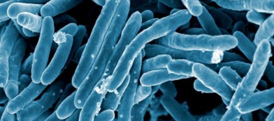 Actinomicetos y tuberculosis