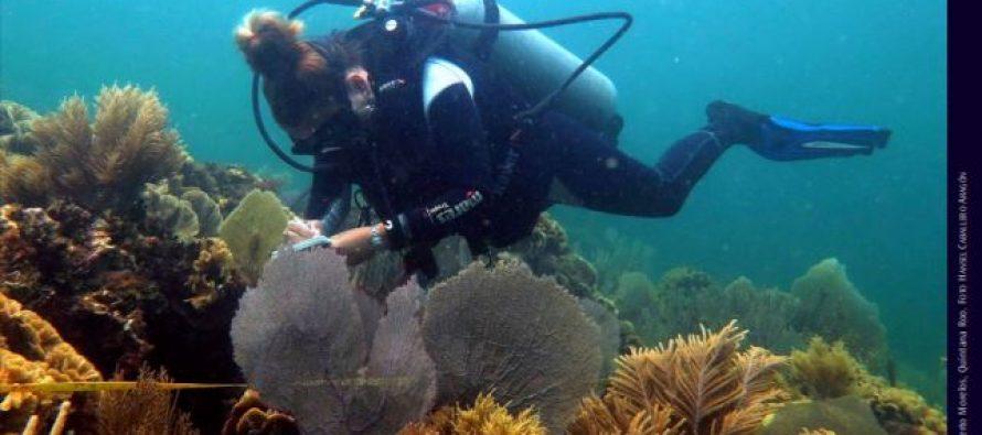 Publicación CONABIO: Protocolos de monitoreo de la biodiversidad marina en áreas naturales protegidas del Caribe mexicano