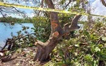 Detienen a cinco cortadores de mangle; pero siguen libres los responsables de la obra en un paraje de Cancún