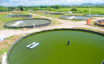 Apoya gobierno mexicano acuacultura con cuota de energía eléctrica para instalaciones acuícolas