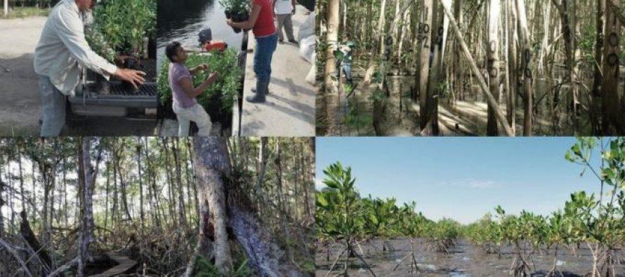Ecosur: VIII diplomado internacional en Ecología, manejo, restauración y legislación ambiental en sistemas de manglares