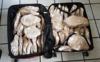 PROFEPA y FGR vinculan a proceso, a venezolano que transportaba a Seúl, 187 buches de totoaba con valor de 43.5 MDP