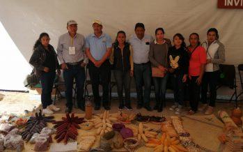 Comunidades y OSC trabajan en la conservación y rescate del maíz criollo en la Reserva de la Biosfera La Sepultura de Chiapas