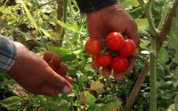 Los sistemas agroecológicos, viables para afrontar problemas sociales y cambio climático, concluyen expertos