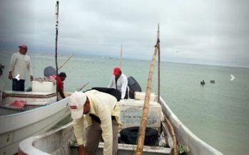 Busca el Inapesca recuperar 90 % de pesquerías mexicanas deterioradas