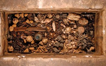 Vestigios de pepinos de mar en ofrenda mexica; antes se identificaron diferentes especies de equinodermos