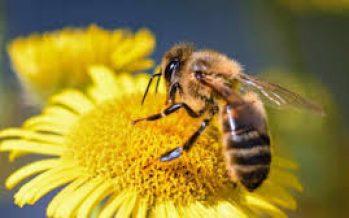 Tasa de extinción de insectos es acelerada por fenómenos como el cambio de uso de suelo y el cambio climático: científicos de la UNAM