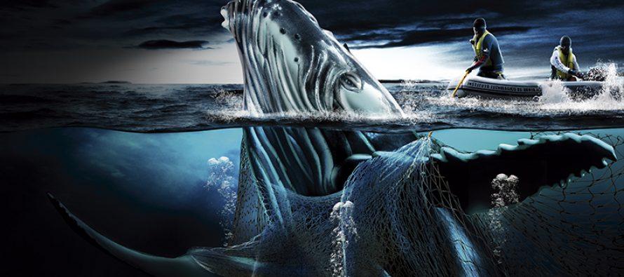Redes fantasmas, depredadoras de ballenas