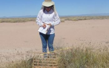 Pastizales se adaptan al cambio climático en el Desierto Chihuahuense