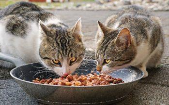 Salmonela y amibas, pueden parasitar a mascotas si su dieta es con alimentos crudos
