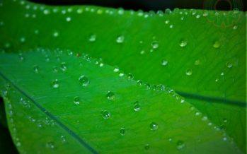 ¿Cómo sudan las plantas?
