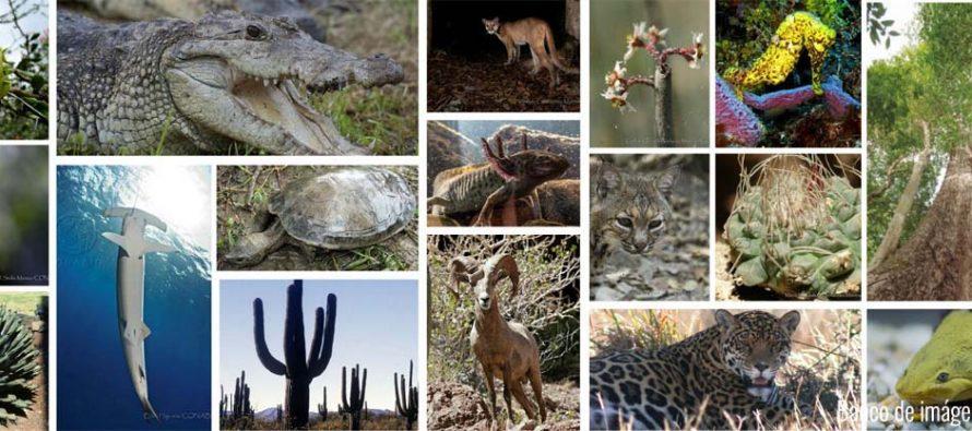Convocan a presentar propuestas de enmienda (inclusión, exclusión o transferencia de especies) a los Apéndices de la CITES